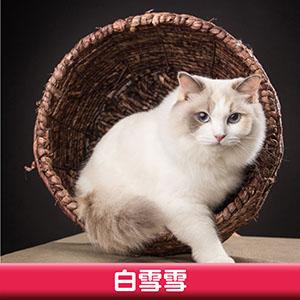 Pet Model 2020 Cat 3 白雪雪