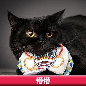Pet Model 2020 Cat 4 懵懵