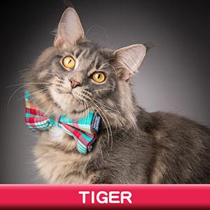 Pet Model 2020 Cat 5 Tiger