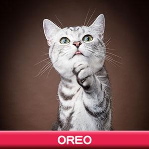 Pet Model 2020 Cat 7 Oreo