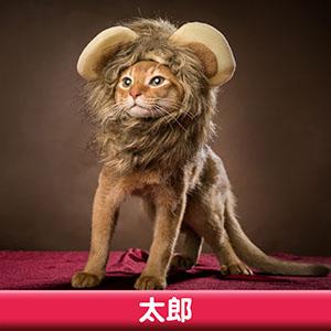 Pet Model 2020 Cat 8 太郎
