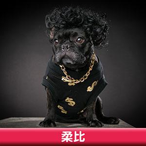 Pet Model 2020 Dog 12 柔比