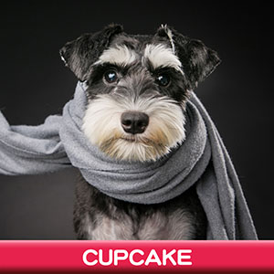 Pet Model 2020 Dog 16 Cupcake