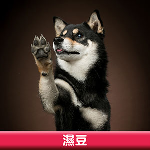 Pet Model 2020 Dog 17 濕豆