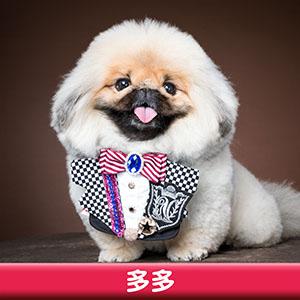 Pet Model 2020 Dog 3 多多