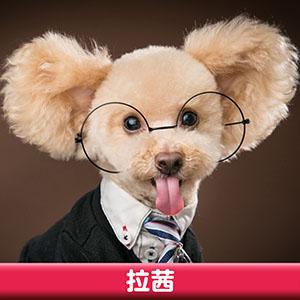 Pet Model 2020 Dog 8 拉茜