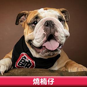 Pet Model 2020 Dog 9 燒楠仔