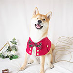 yuandmi.dogwear