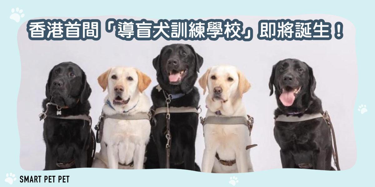 108 香港導盲犬訓練學校-01