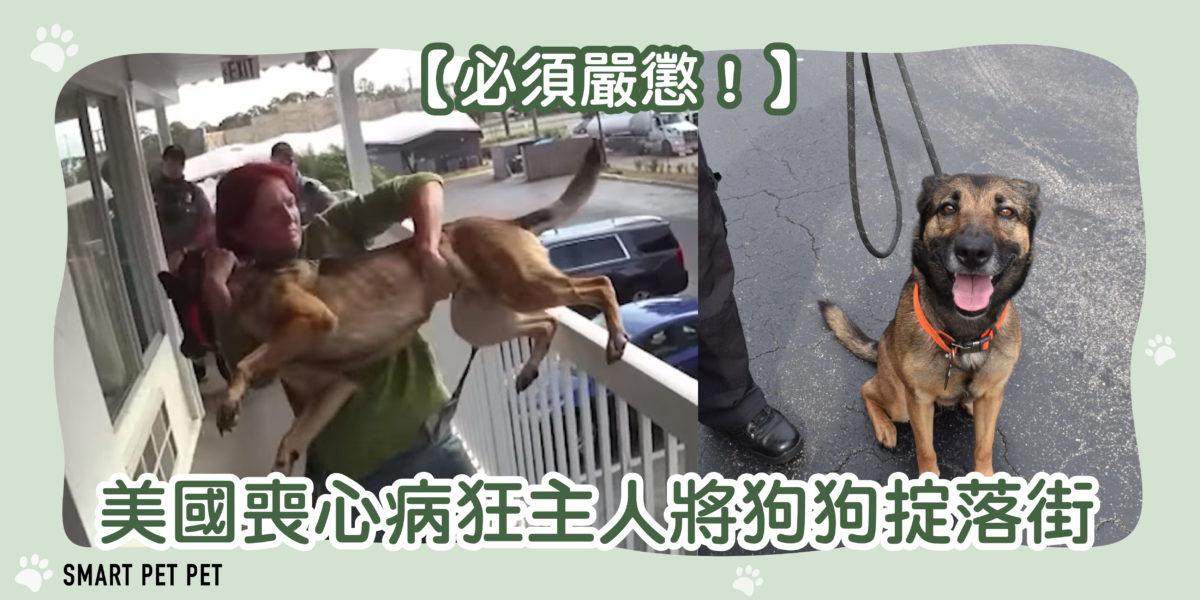 115 喪心病狂主人狗狗掟落街-01