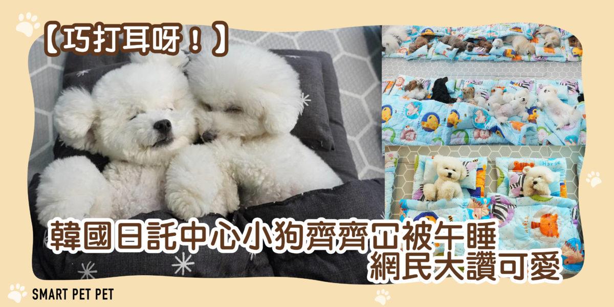 116 韓國小狗午睡-01
