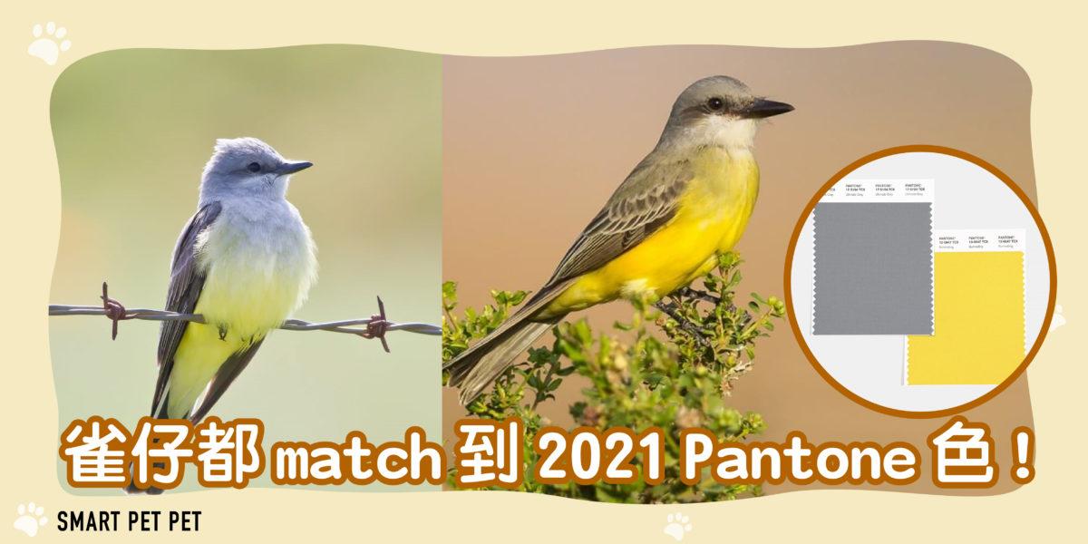 132 雀仔2021 Pantone色-01