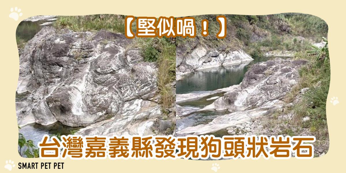 161 台灣嘉義縣發現狗頭狀岩石-01