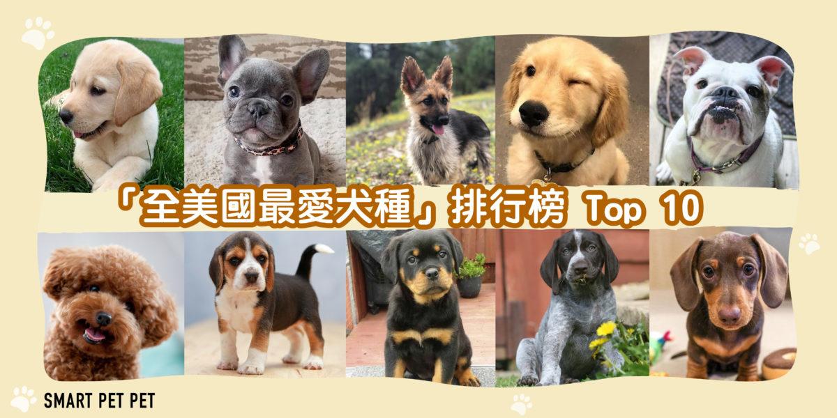 198 全美國最愛犬種-01