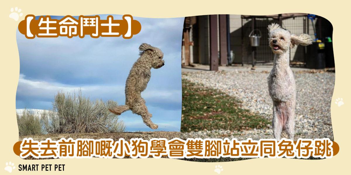 205 失去前腳嘅小狗學會雙腳站立同兔仔跳-01