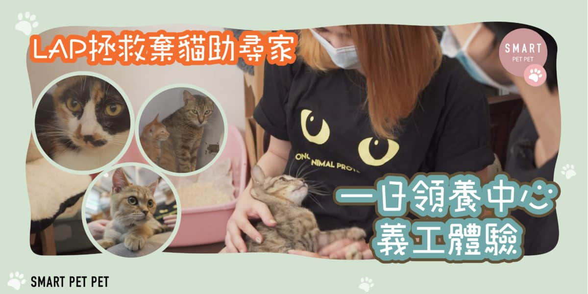 貓 領養_feature