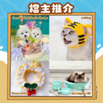 Smart Pet Pet 2021 仲夏寵物市集檔主握推介1